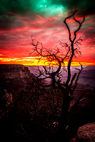 Inflaming-serenity-grand-canyon-2014-sunset-tree-southrim-arizona