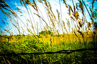 barb-wire-in-kansas-field-grass-blue-sky-crop-hannah-maria-old-81-studios-2